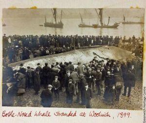 whale11111